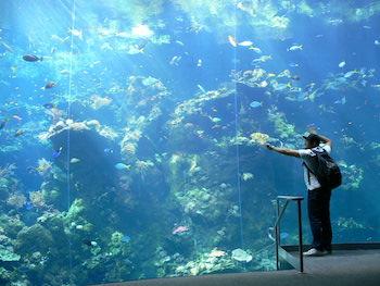 Akvarium San Francisco